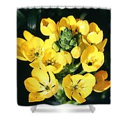 Star Of Bethlehem Shower Curtain by Science Source