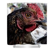 Star Of The Hen Party Shower Curtain