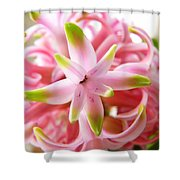Star Of The Show Hyacinth  Shower Curtain