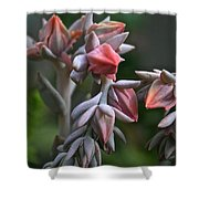 Star Succulents Shower Curtain