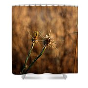 Star Thistle Shower Curtain