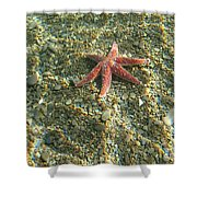Starfish In Shallow Water Shower Curtain by Ted Kinsman