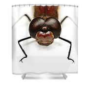 Staring At Red Dragonfly Shower Curtain