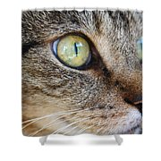 Staring Cat Shower Curtain