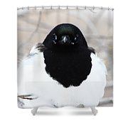 Staring Contest Shower Curtain
