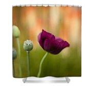 Stark Poppies Shower Curtain