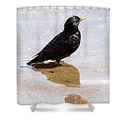 Starling Paddling Shower Curtain