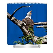 Squawking Alaskan Eagle Shower Curtain
