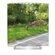Stay Off The Road Bambi Shower Curtain