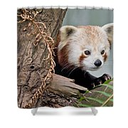 Stealthy Red Panda Shower Curtain