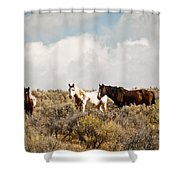 Steens Wild Horses Shower Curtain