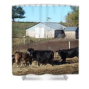 Steers Shower Curtain