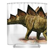 Stegosaurus Armatus, A Prehistoric Era Shower Curtain