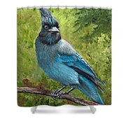 Stellar Jay Shower Curtain by Dee Carpenter