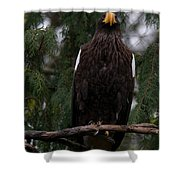 Steller's Sea Eagle Shower Curtain