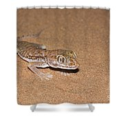 Stenodactylus Petrii Or Dune Gecko Shower Curtain