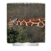 Sticking Your Neck Out Shower Curtain