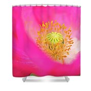 Stigma Shower Curtain