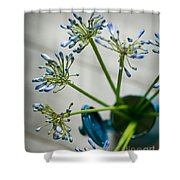 Still Life 01 Shower Curtain