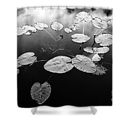Stillness Shower Curtain by Scott Pellegrin