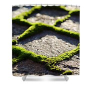 Stone Road With Green Moss Shower Curtain