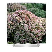 Stonecrop Shower Curtain