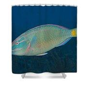 Stoplight Parrotfish On Caribbean Reef Shower Curtain