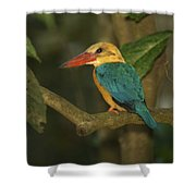 Stork-billed Kingfisher Perched Shower Curtain