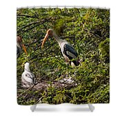 Storks Around A Nest Shower Curtain