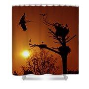 Storks Shower Curtain by Carlos Caetano