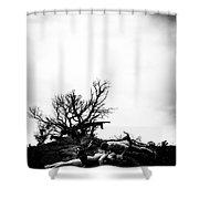 Stormy Pushups Shower Curtain
