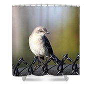 Straddling The Fence Shower Curtain