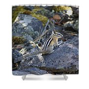 Straight Tailed Chipmunk On A Rock Shower Curtain