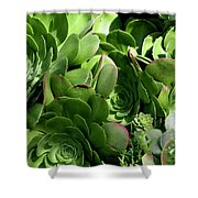 Strand Succulent Shower Curtain