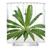 Strange Banana Tree Shower Curtain