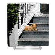 Stratford Cat Nap Shower Curtain