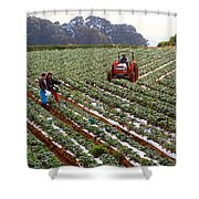 Strawberry Farm Shower Curtain