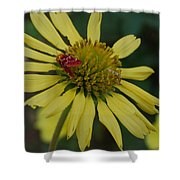 Strawberry Moth On A Yellow Flower Shower Curtain