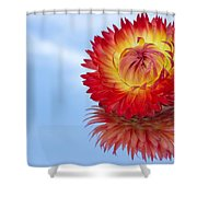 Strawflower Reflection Shower Curtain