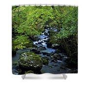 Stream Flowing Through A Forest Shower Curtain