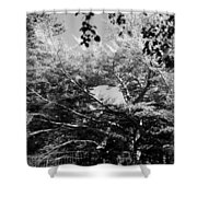Streched Trees In Black And White Shower Curtain