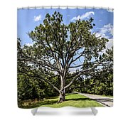 Stretched Out Shower Curtain