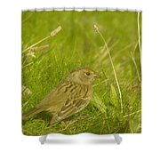 Stretching The Wings  Shower Curtain