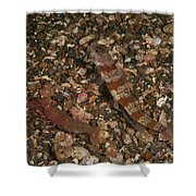 Striated Goby And Blind Shrimp, North Shower Curtain