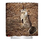 Strike A Squirrelly Pose Shower Curtain
