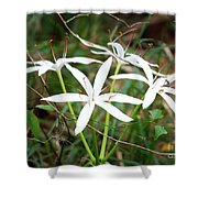 String Lily Shower Curtain