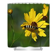 Striped Bee On Wildflower Shower Curtain