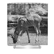 Striped Deer In Black And White Shower Curtain