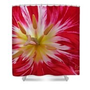 Striped Flaming Tulips. Hot Pink Rio Carnival Shower Curtain