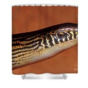 Striped Lateral Fold Lizard Shower Curtain
